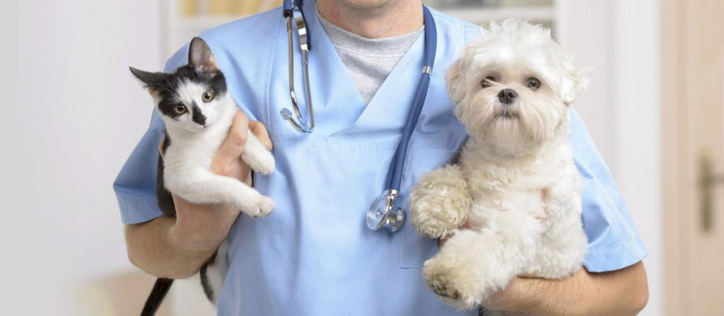 ветеринар на дом спб вызов цена