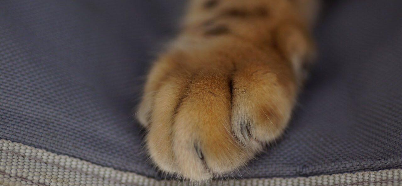 усыпление животных на дому в спб цена, усыпление животных, усыпление кошек котов собак фото