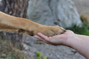 усыпление собак и кошек на дому
