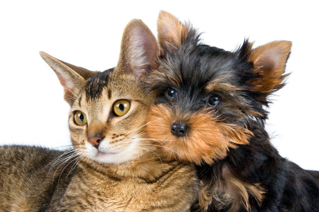 ветеринар на дом вызов в спб, круглосуточно вызов ветеринара